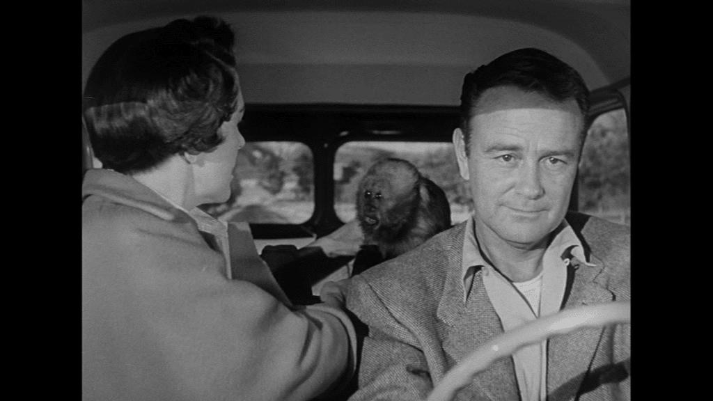 Lew Ayres und Nancy Reagan fahren im Auto ihr neuestes Versuchsobjekt, einen kleinen Affen, nach Hause